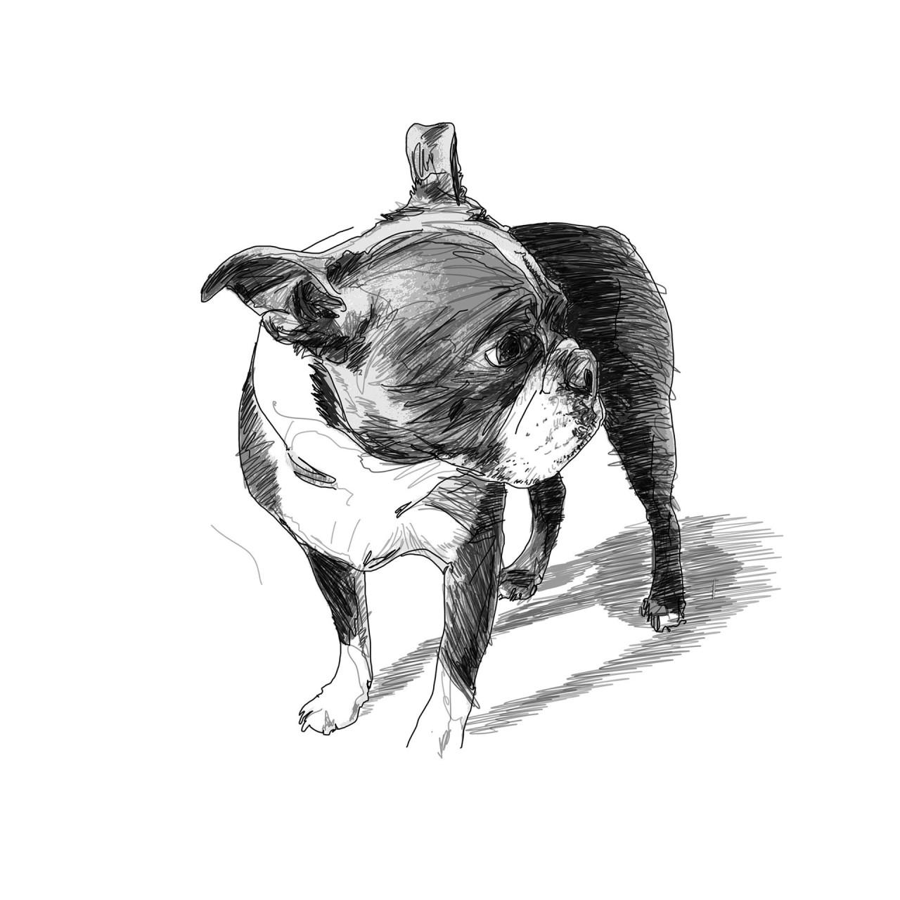 Beatrix-Draw02bsq