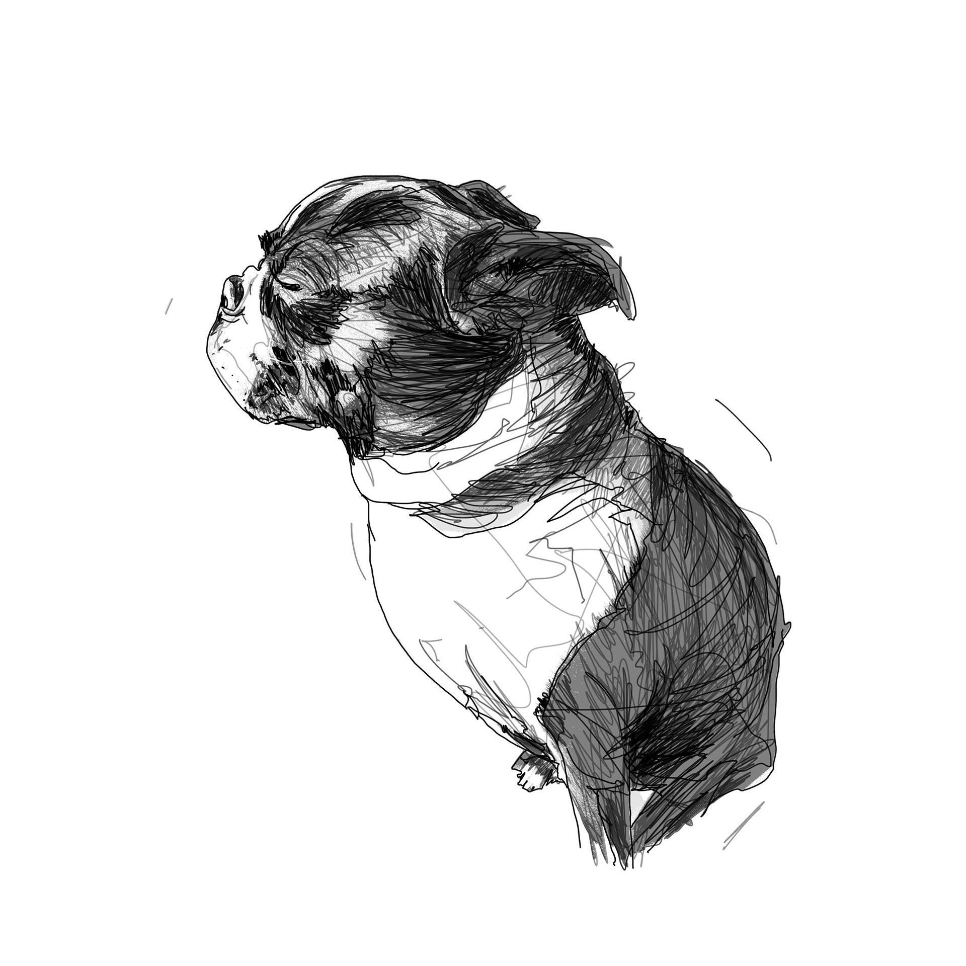 Beatrix-Draw02csq
